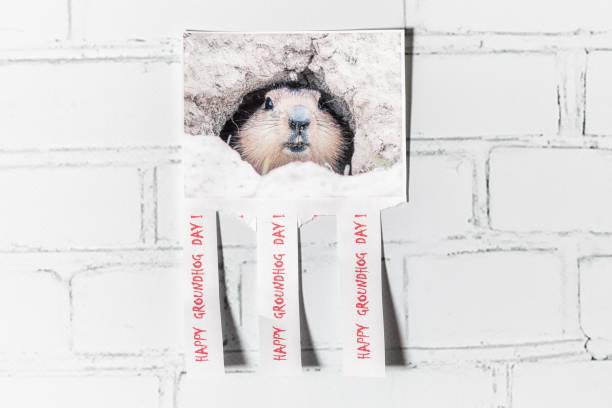 saludos del día de la marmota en el fondo de una pared de ladrillo ligero, rusia - groundhog day fotografías e imágenes de stock