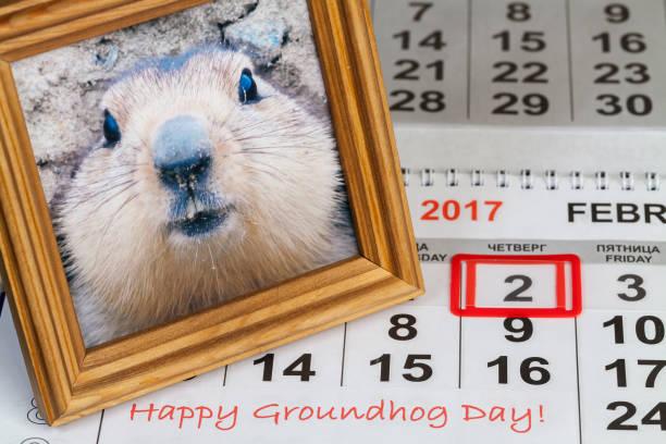 groundhog day in the calendar - groundhog day fotografías e imágenes de stock
