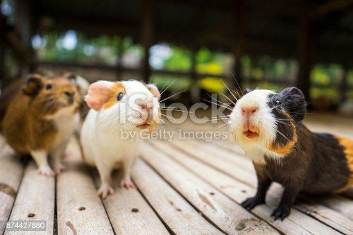 Groundhog feeding in the zoo