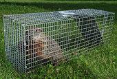 Groundhog  trap