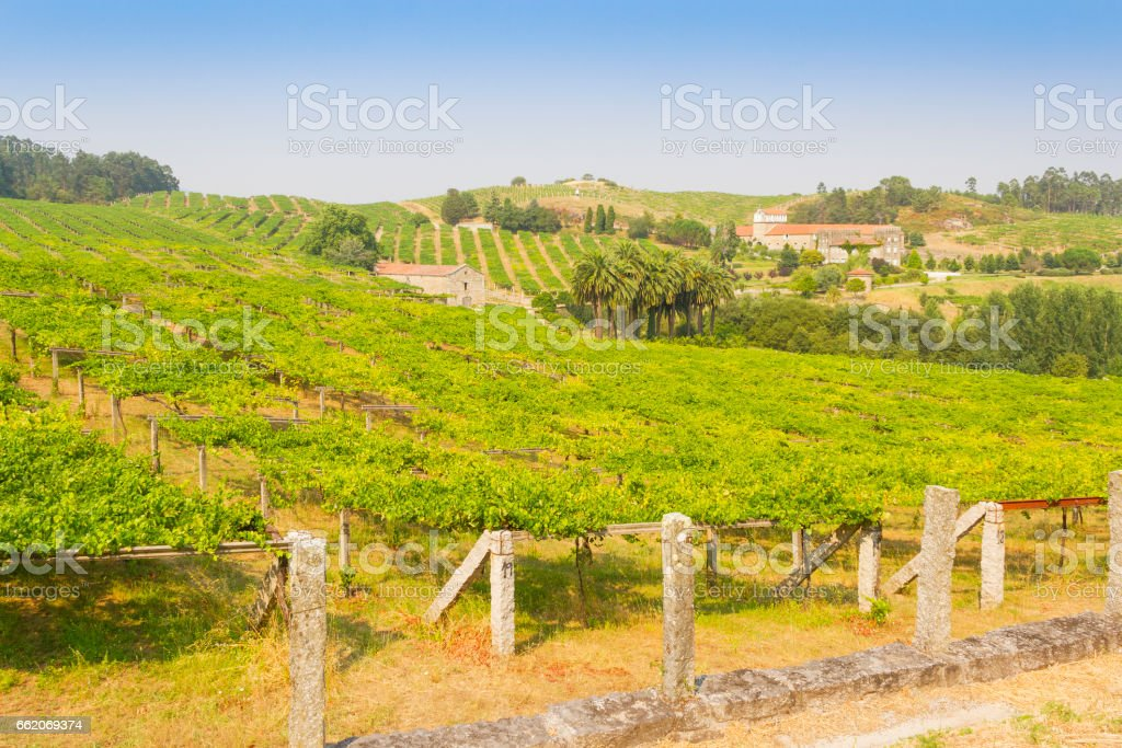 Grounds growing grapes stock photo