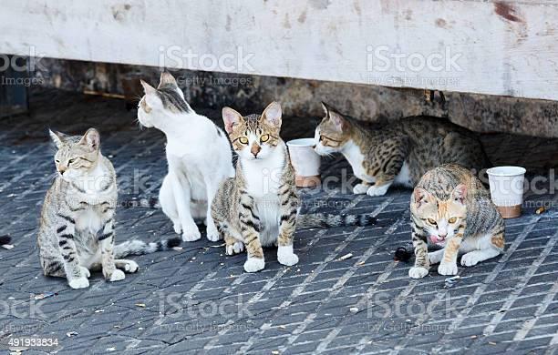 Group homeless cats picture id491933834?b=1&k=6&m=491933834&s=612x612&h=17uvc caoolsw6zynkgga9dwnf0izmqbkatqe2ef cu=