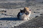 Group homeless kittens on concrete pier in sea port