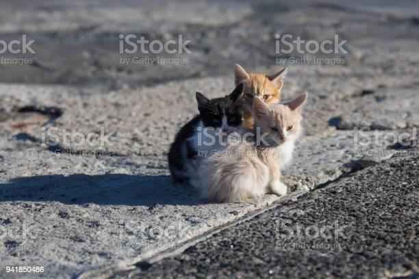 Group homeless kittens on concrete pier in sea port picture id941850486?b=1&k=6&m=941850486&s=612x612&h=rlinjl7hvw6dgngyxtg1gjirpyuobtutz23za5ka0gy=