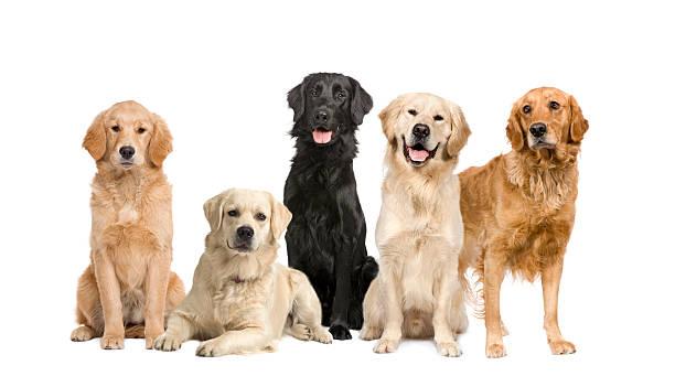 Group of 5 dogs picture id117849249?b=1&k=6&m=117849249&s=612x612&w=0&h=nwvmfwwkbr cw5fx4em40ybwvkrd4  dnrbdx1imkci=