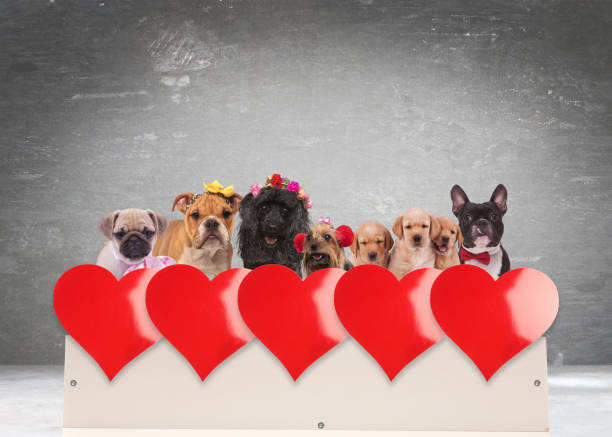 Group of adorable dogs celebrating valentines day picture id905449336?b=1&k=6&m=905449336&s=612x612&w=0&h=nb0lmmk3ojsoux3kwtpeexipwun52cxh5pngsyrij24=