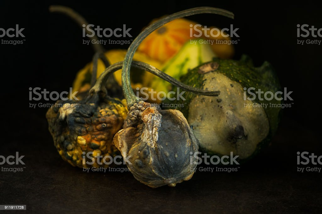 Group of advanced rotten gourds stock photo