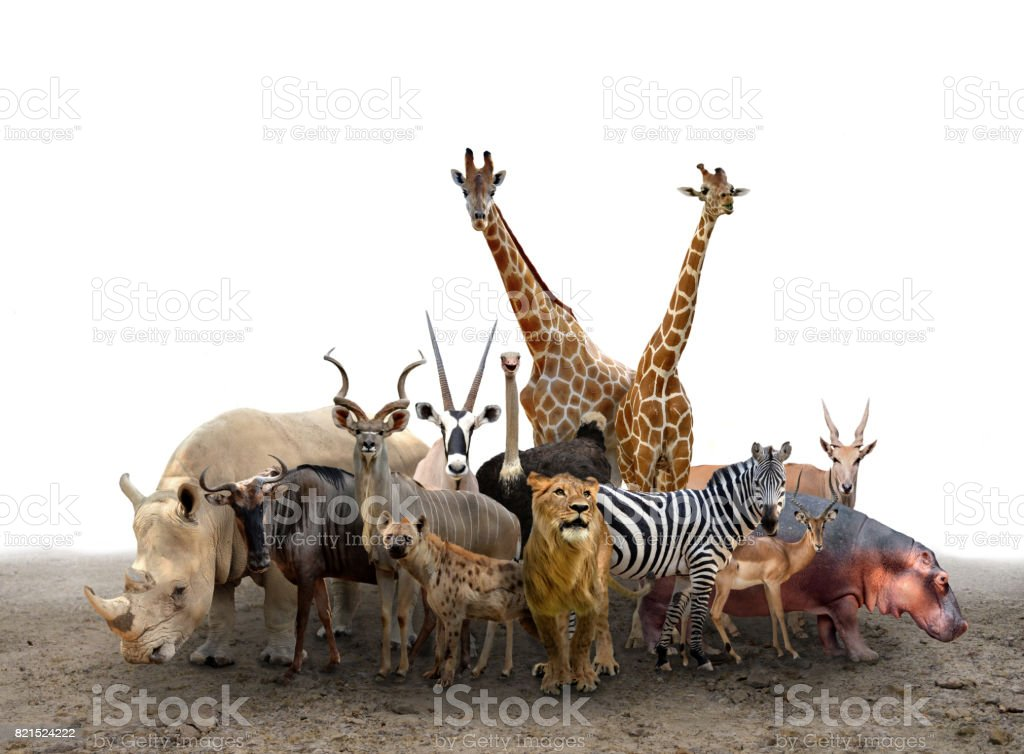 group of africa animals stock photo