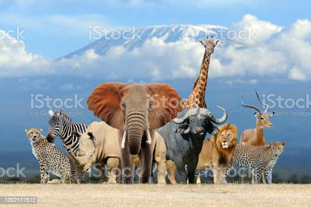 Group of african safari animals together picture id1202117512?b=1&k=6&m=1202117512&s=612x612&h=fteumrnzuptclatvzupobt23d061kg 7ja8 yehys c=