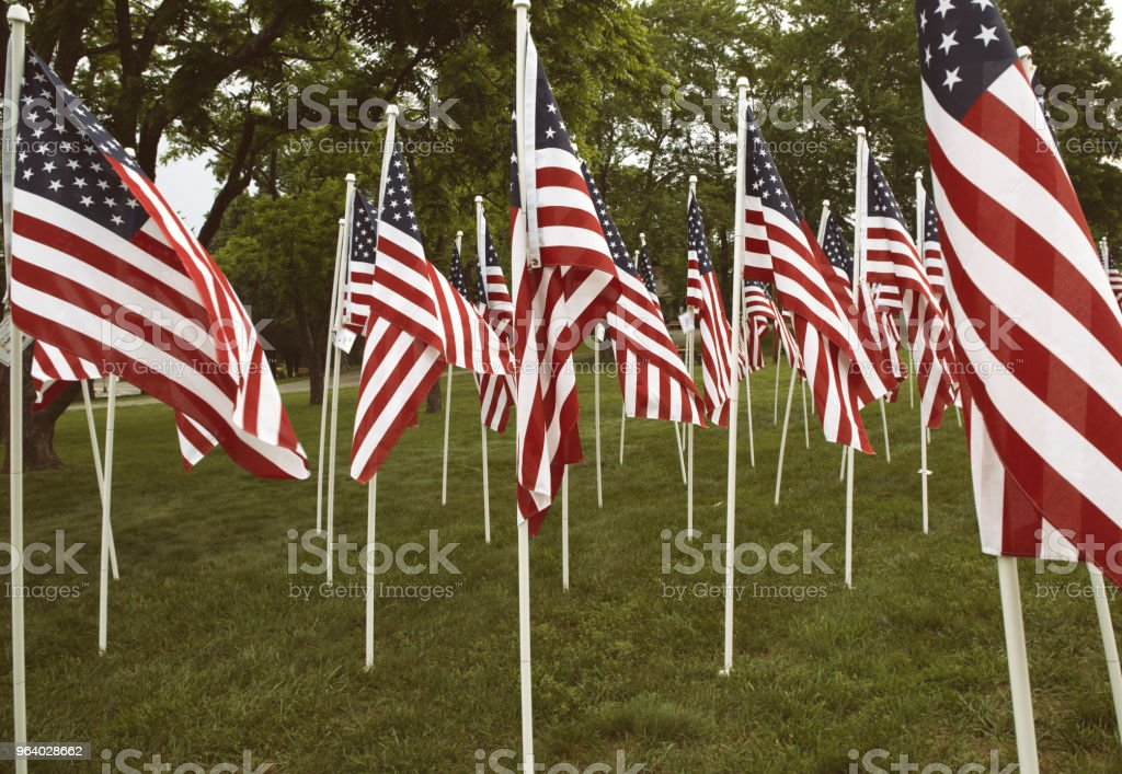 Group of American flags in Haymarket, Virginia on Memorial Day - Royalty-free American Flag Stock Photo