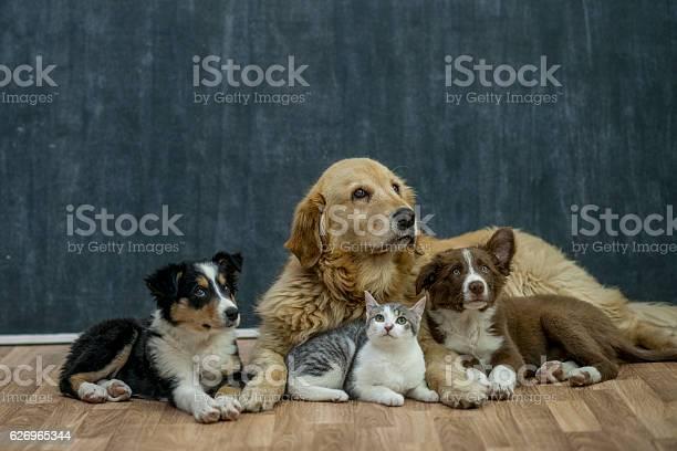 Group of animals picture id626965344?b=1&k=6&m=626965344&s=612x612&h=gj1ttvtfqylccproeqtwzo0gcj3vmawgz6td9d9l9rg=