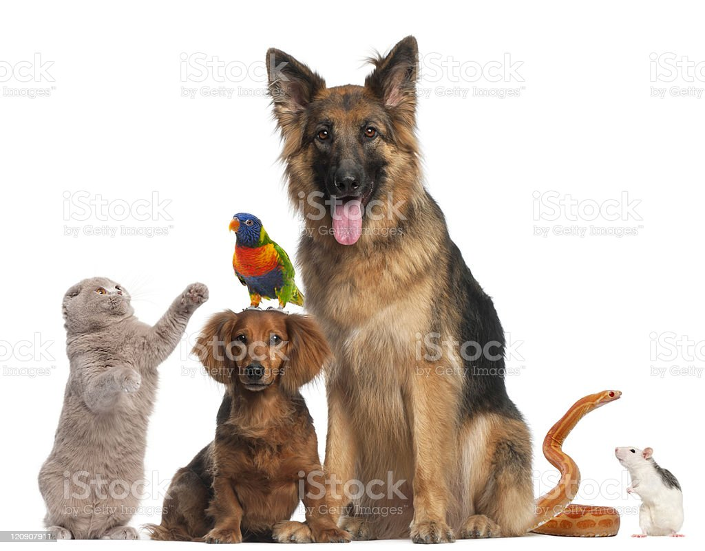 Group of animals, white background. stock photo