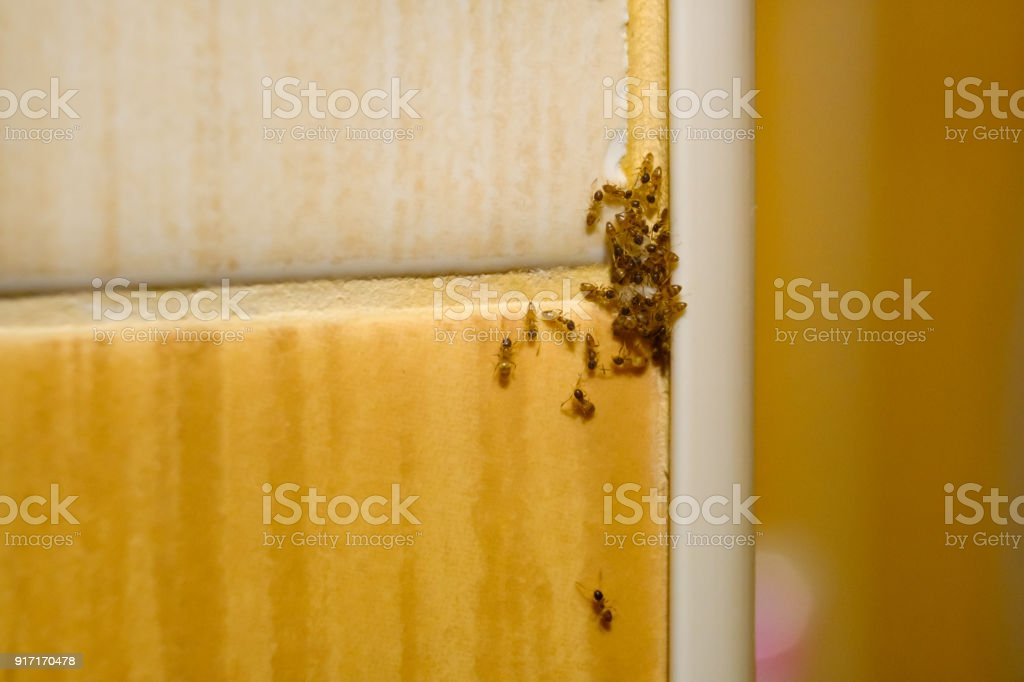 Group of ants in unity stock photo