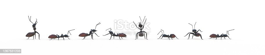 group of ants working together 3D rendering