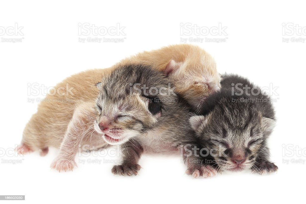 Group of baby cats royalty-free stock photo
