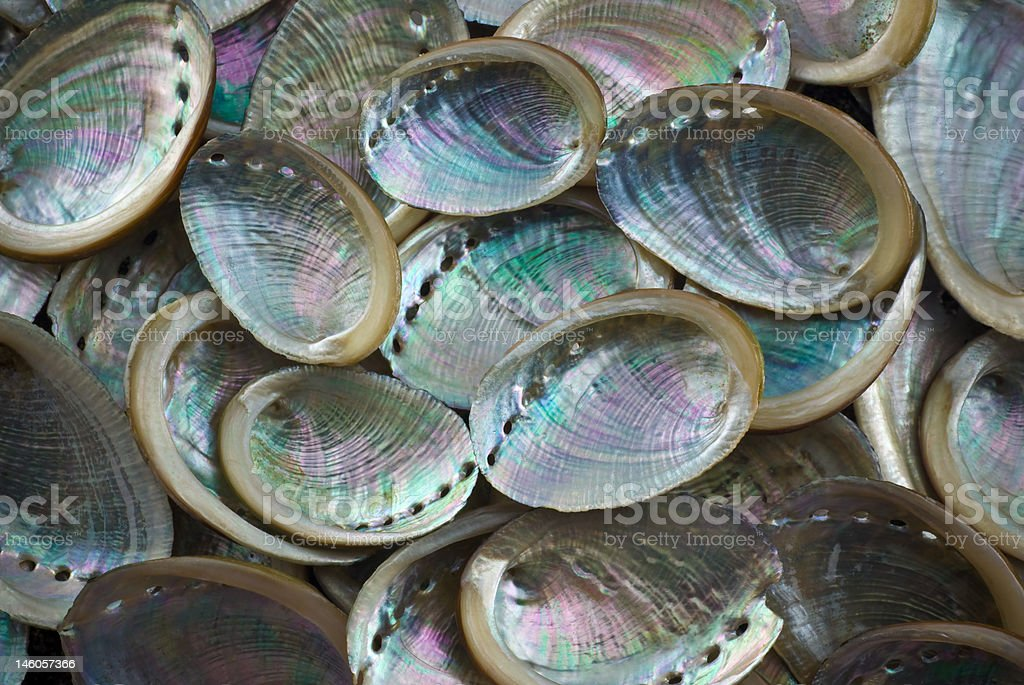 group of baby paua shells stock photo