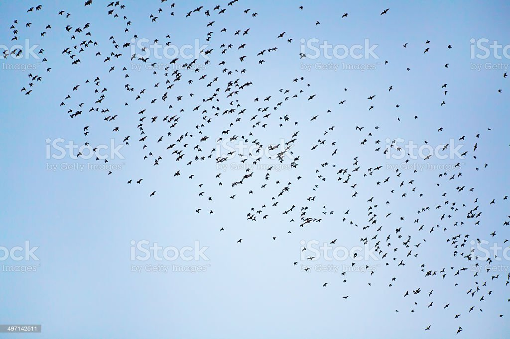 Group of bats flying in the sky royalty-free stock photo