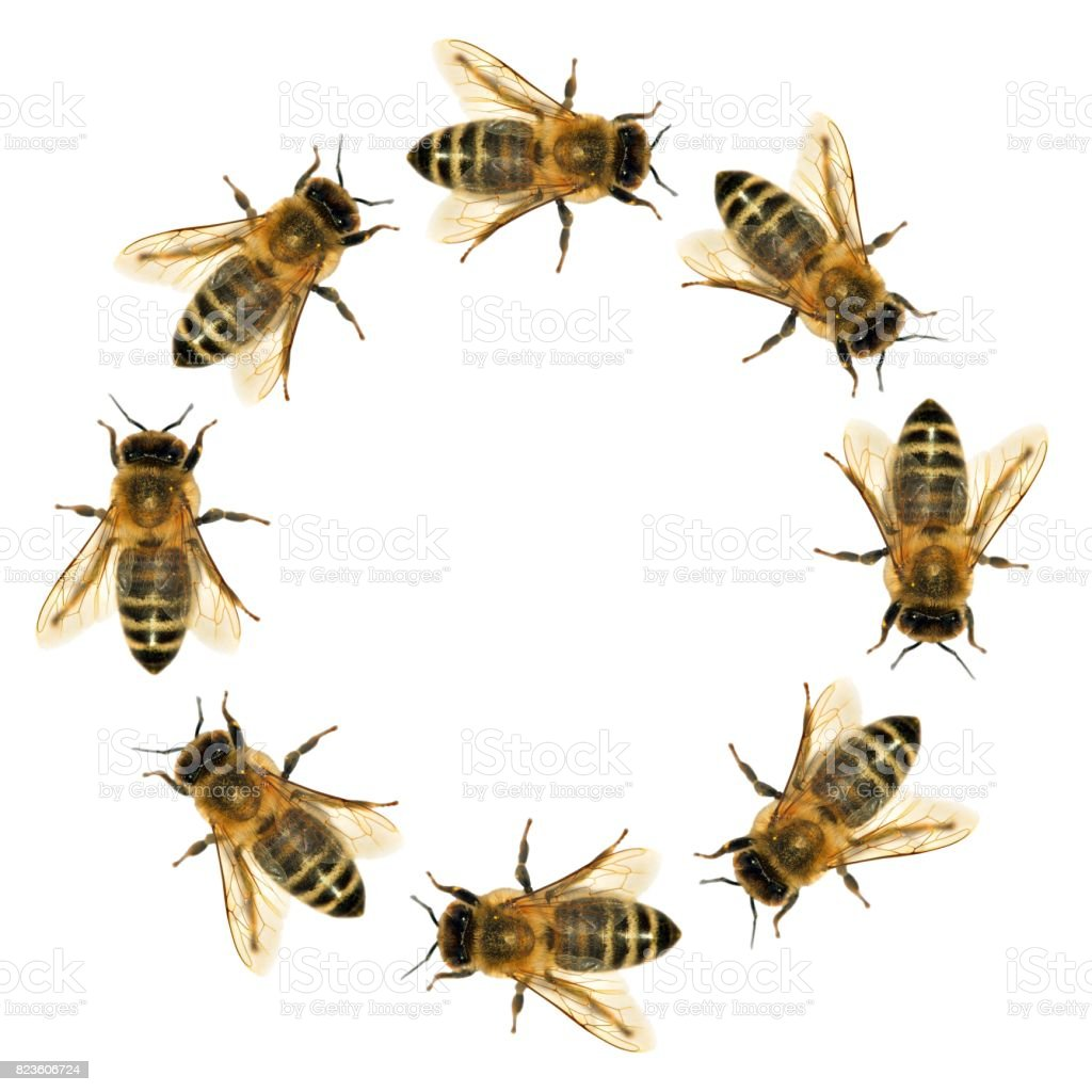 group of bee or honeybee in the circle stock photo