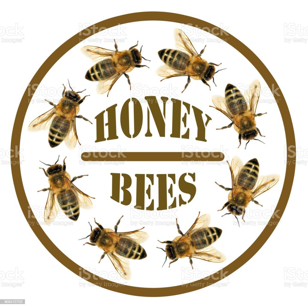 group of bee or honeybee in the circle with text stock photo