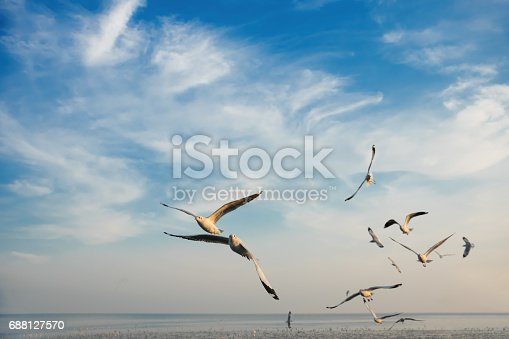 istock Group of Birds flying at sunset 688127570