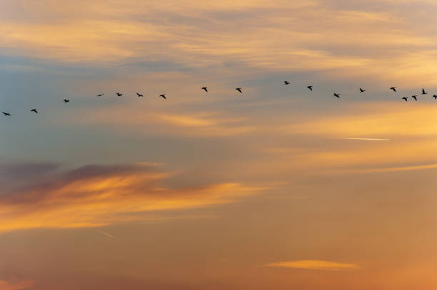 Group of birds in the sky above during dusk stock photo