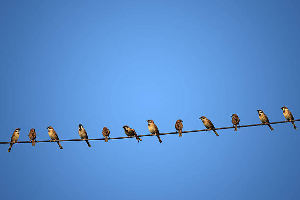 group of birds on a power  line concept of risk – Foto