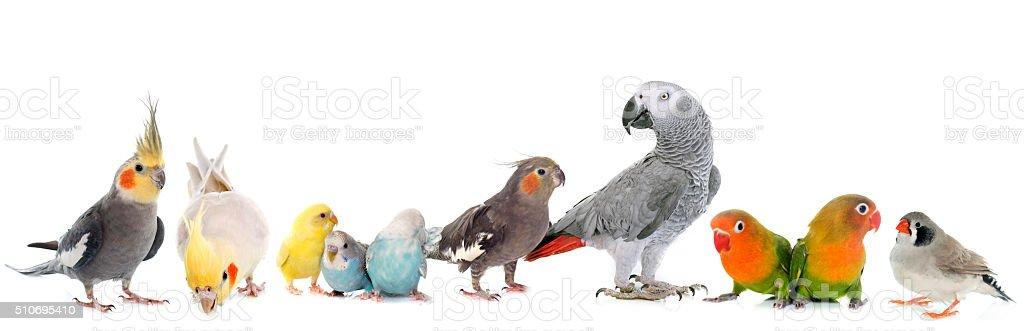 group of birds stock photo