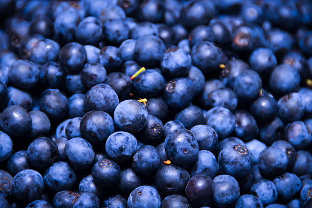 Group of Blueberries stock photo