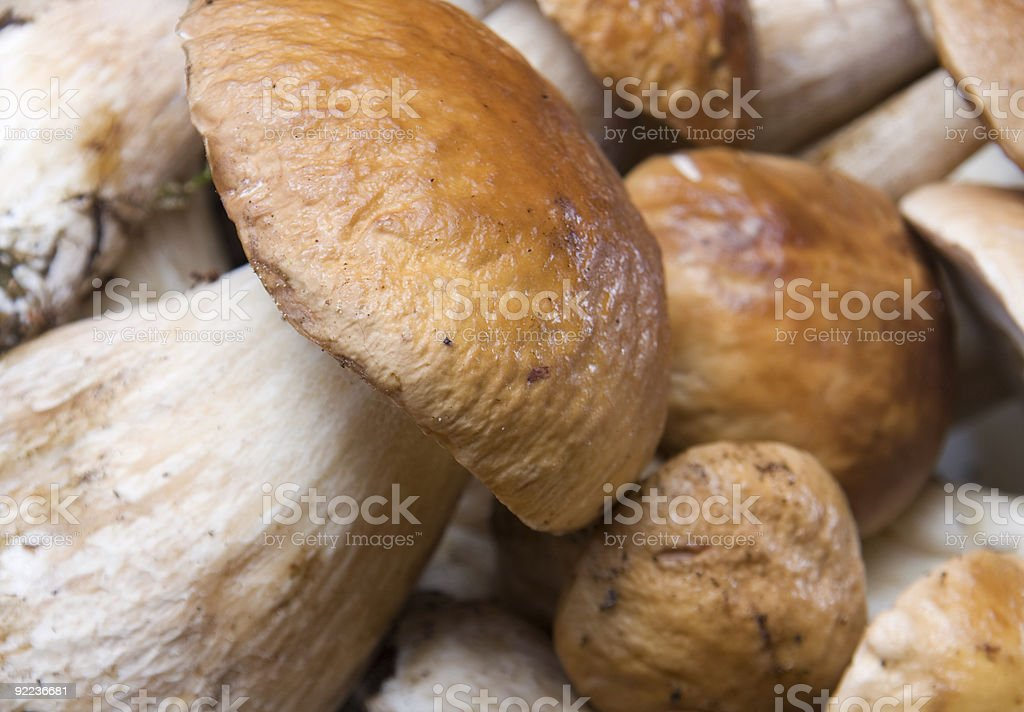 Group of boletus edulis royalty-free stock photo