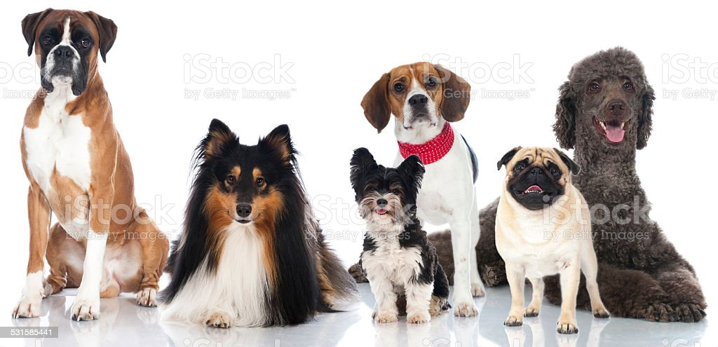 Group of breed dogs stock photo
