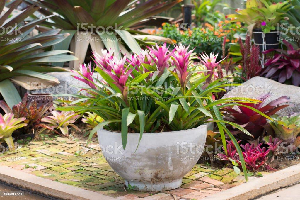 Groupe De Bromeliacees Dans Un Decor Pot Fleur Jardin Photos Et