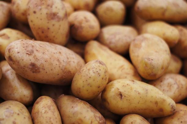 group of brown fresh potatoes selective focus - batata crua imagens e fotografias de stock