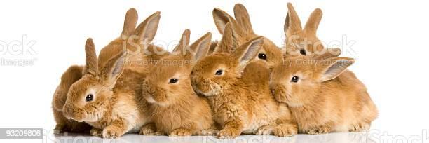 Group of bunnies picture id93209806?b=1&k=6&m=93209806&s=612x612&h=vyswaqpludl0cblnpqzdkadr3bgl53n3qmqtn4oxyxy=