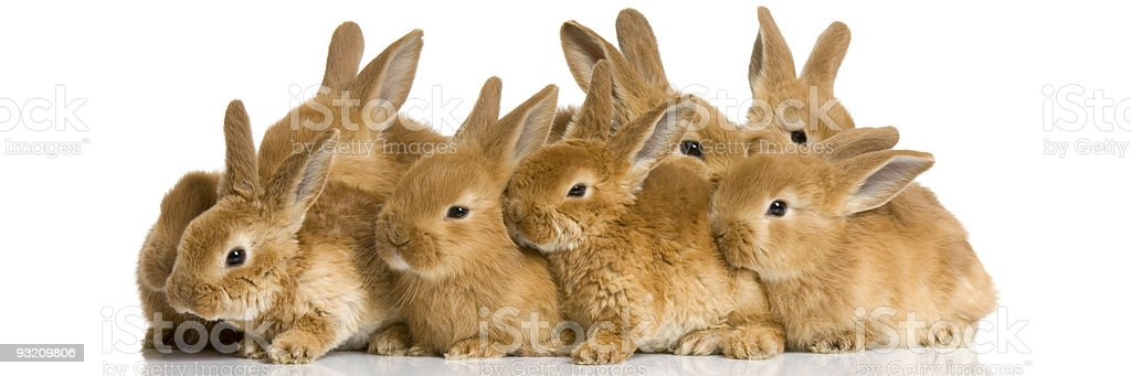 group of bunnies stock photo