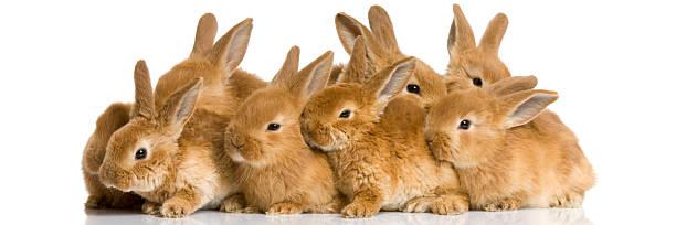 Groupe de lapins - Photo