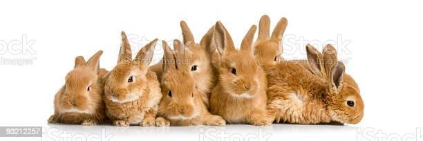 Group of bunnies picture id93212257?b=1&k=6&m=93212257&s=612x612&h=bkcpq3nwsgg70b85g6hr8weudciylfabe5a1lk0o414=