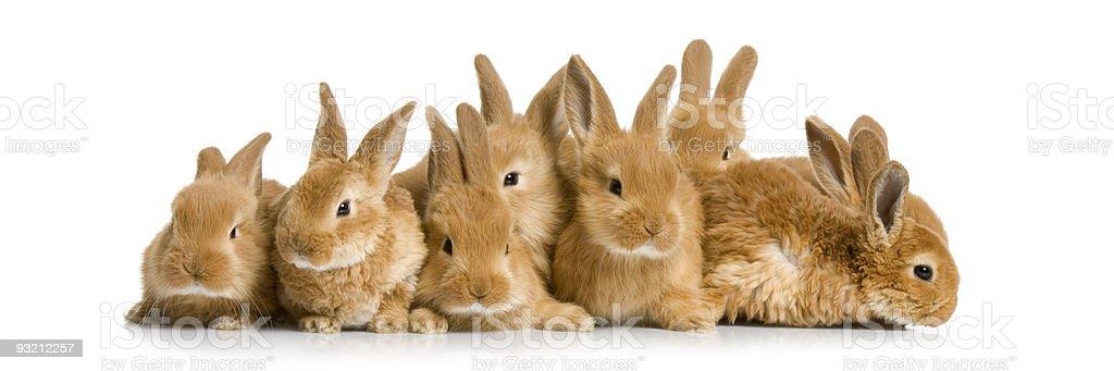 group of bunnies stock photo