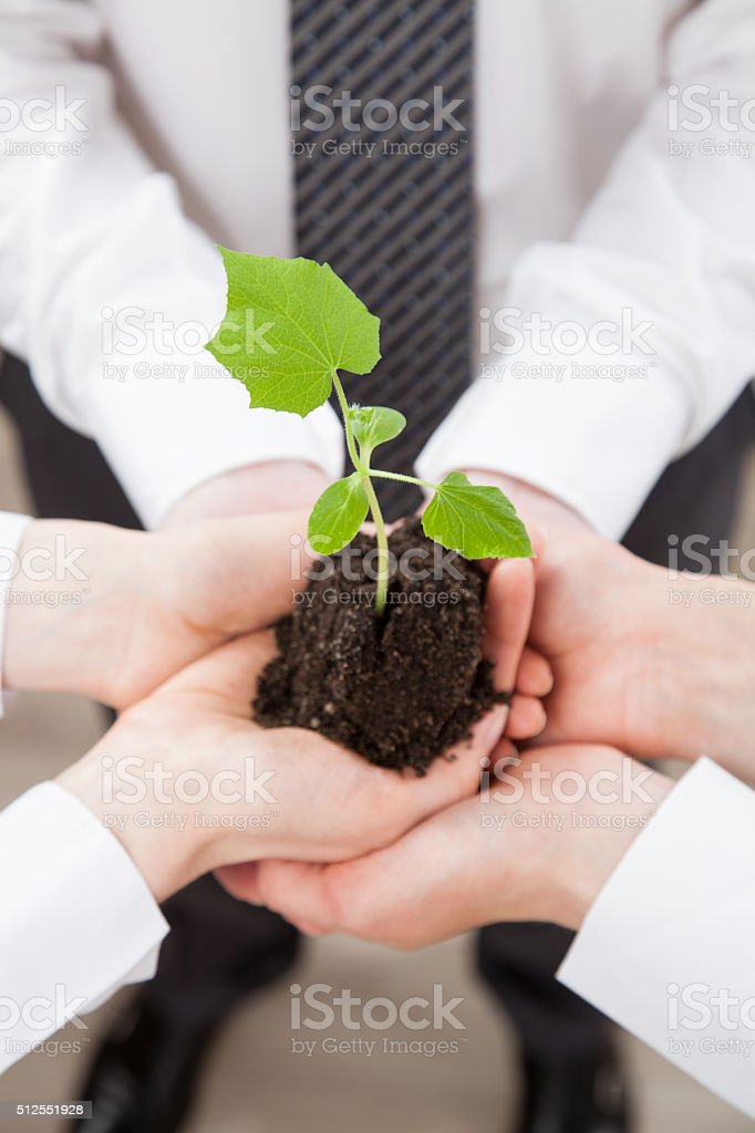 Groupe de gens d'affaires tenant une Sprout vert - Photo