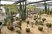 Group of cactus in green house.