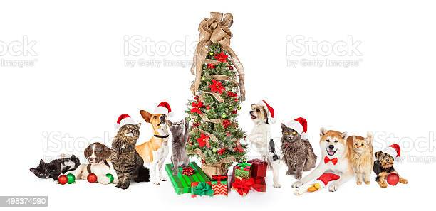Group of cats and dogs around christmas tree picture id498374590?b=1&k=6&m=498374590&s=612x612&h=jdv54l1o niffmwgpjzh1soq6 mp9txbpyjhzsuh4nu=