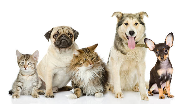 Group of cats and dogs in front looking at camera picture id517383132?b=1&k=6&m=517383132&s=612x612&w=0&h=ex jj8mjanum jalxgxh0kkxzbghnyfbjdtccx48aqa=
