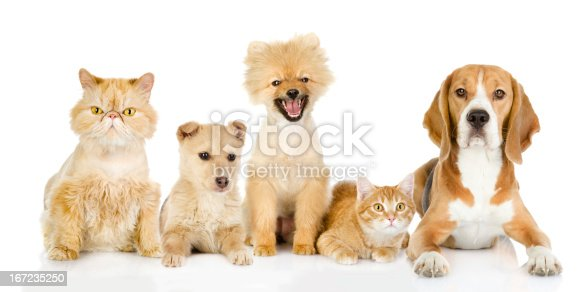 istock Group of cats and dogs in front. 167235250