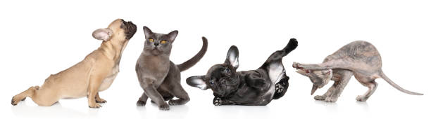 Group of cats and dogs in yoga poses picture id946870568?b=1&k=6&m=946870568&s=612x612&w=0&h=f82q7feszlxrs47n9opxbf0u7e 6m4wdyft81fr0qro=
