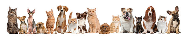 group of cats and dogs - in a row stock pictures, royalty-free photos & images