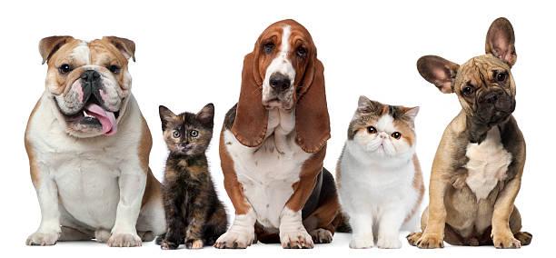 Group of cats and dogs picture id137457731?b=1&k=6&m=137457731&s=612x612&w=0&h=0lp8cb1sig3g1cwecqamx9cpl25sdykn1hnhiywqgaq=