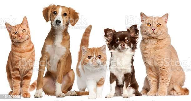 Group of cats and dogs picture id154204966?b=1&k=6&m=154204966&s=612x612&h=4n784i7yej68quf5nlb4bzlrg1pjinz3d4ffu oj5js=