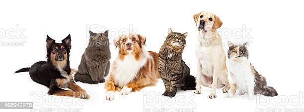 Group of cats and dogs picture id468942278?b=1&k=6&m=468942278&s=612x612&h=fwoaddw1wyeqk6e7nwxlqsifa8igvdad5jiotifthm8=