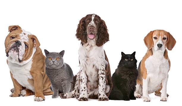 Group of cats and dogs picture id494640196?b=1&k=6&m=494640196&s=612x612&w=0&h=gesbfcjjzxebyz2o3gdeogyk 0oserfw9ez4bw9kksc=
