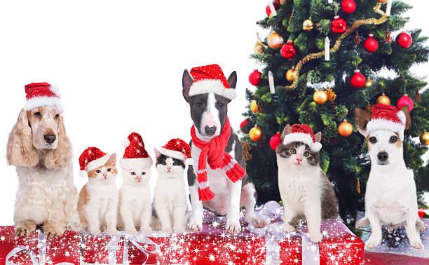 gruppe von katzen und hunden mit weihnachtsbaum - schal mit sternen stock-fotos und bilder