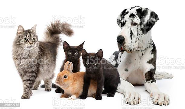 Group of cats dogs and rabbit picture id136522786?b=1&k=6&m=136522786&s=612x612&h=dxh skl92st6rqunaeah5nhebdkjwpzhywmgd8o2ts4=